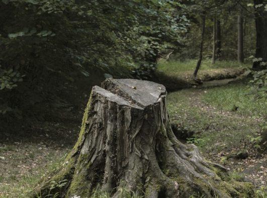 Stump Removal Near Me
